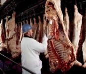 beef_carcass_250
