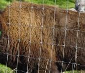 buffalo_banner