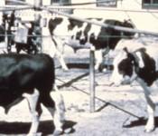 bull-exercise