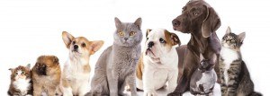 Cats-and-Dogs-1400x500