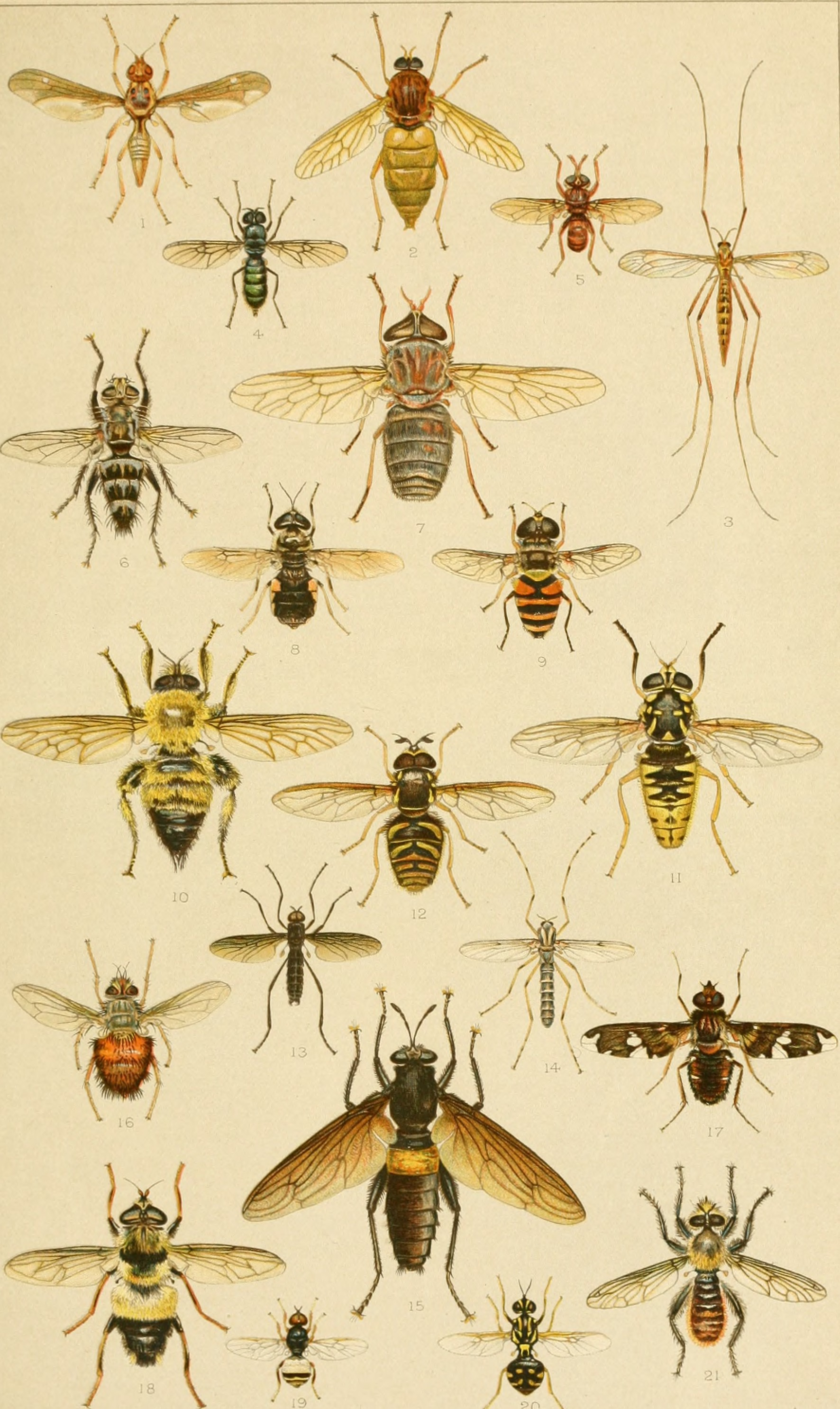 Annual_report_of_the_State_Entomologist_of_Minnesota_to_the_Governor_for_the_year_.._(1905)_(19180067480)
