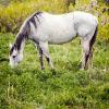 horse, alfalfa