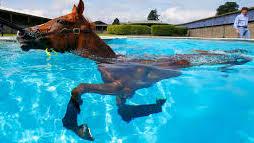 horse in pool
