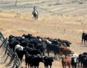 rancher-186x300-jpg