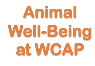 Animal Well-being