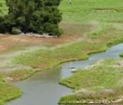 ecoli_river