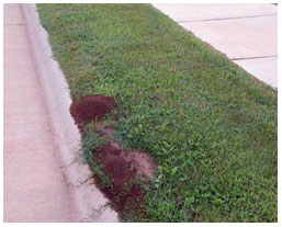 A imported red fire ant mound. Photo from Jake Farnum, Bugwood.org