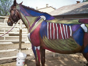 Horse with skin painted showing bones and muscles