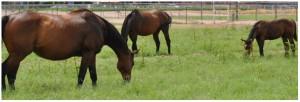 horse_banner
