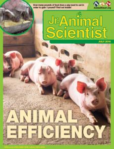 jr animal science