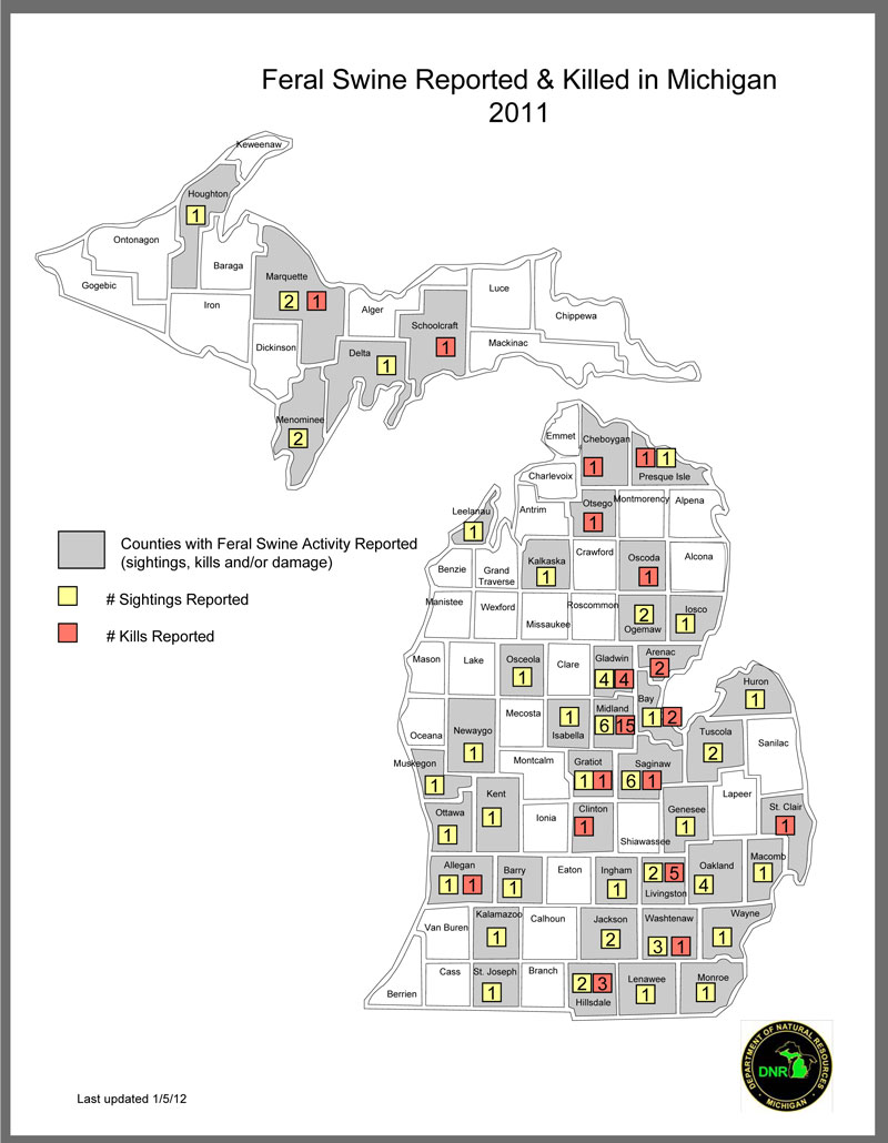 Feral Swine Sightings In Michigan Map.Misconceptions Fuel Feral Swine Problems