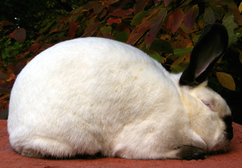rabbitCAdoe